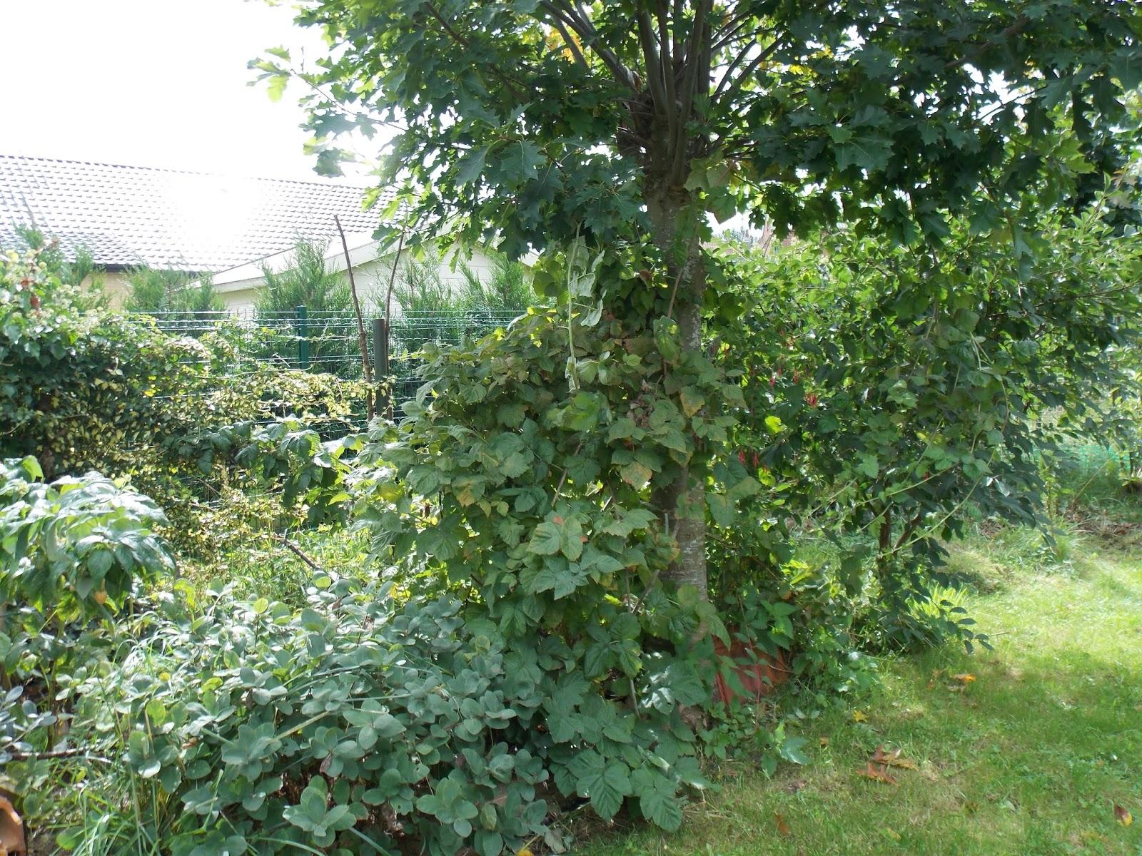 Ecolo bio nature permaculture urbaine et jardinage bio for Jardin foret