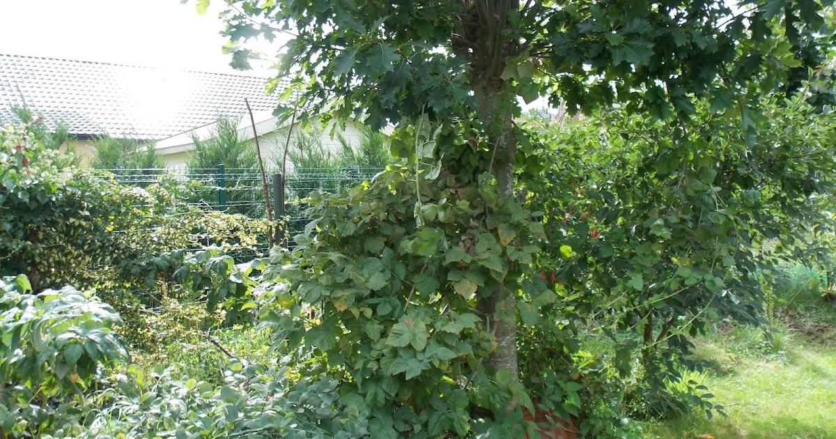 Ecolo bio nature permaculture un mini exemple de jardin for Jardin foret