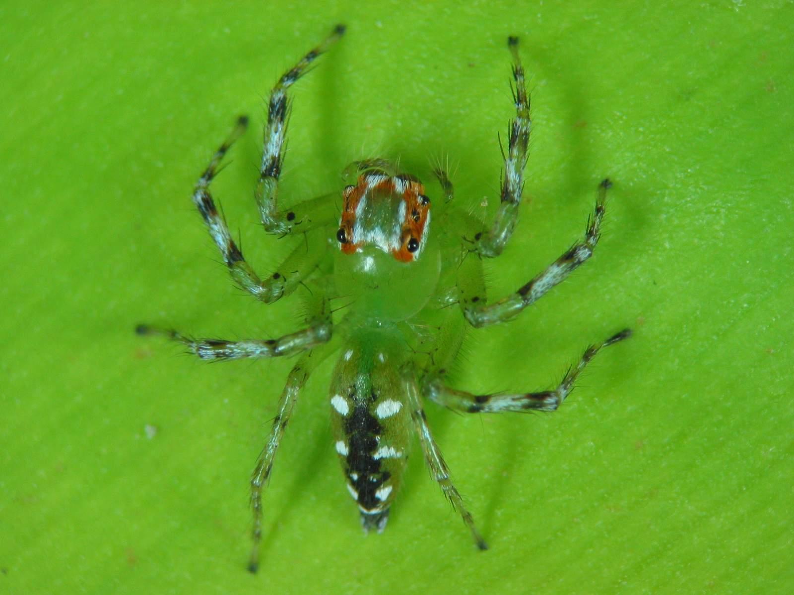 spider in india
