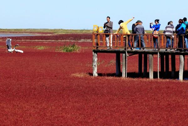 GAMBAR pada 20 September lalu menunjukkan sekumpulan pengunjung melawat Pantai Merah di Panjin, timur laut China.
