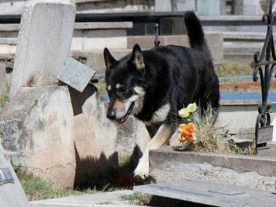 La increíble historia de un perro que vive junto a su dueño, en el cementerio 600x0_583690