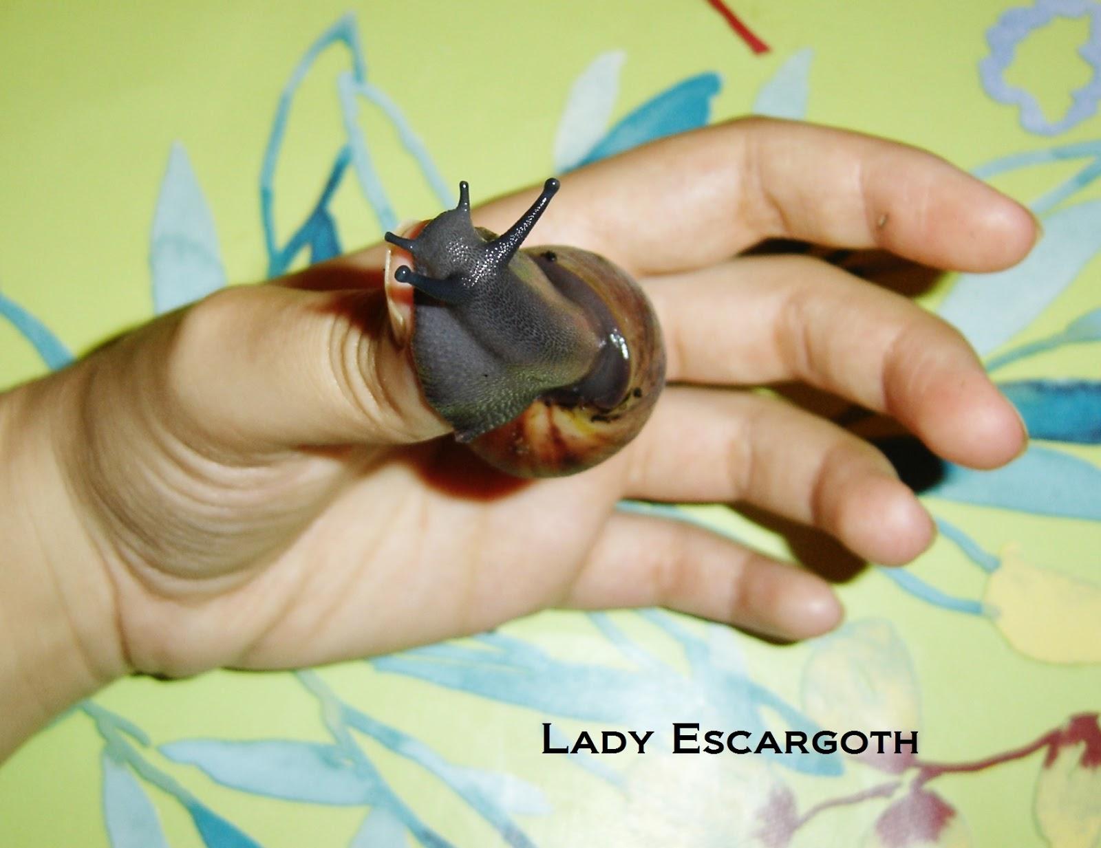 bebe escargot geant