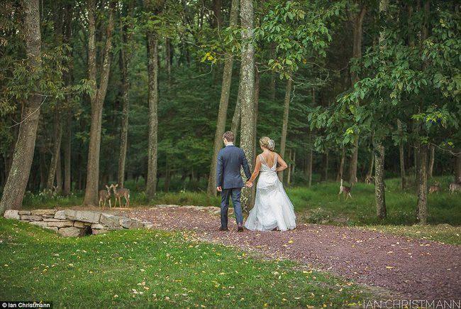 Unik, Sekelompok Rusa Ini Datang Di Resepsi Pernikahan, Membuat Suasana Semakin Romantis