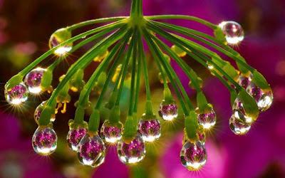Amazing Rain Drops Image