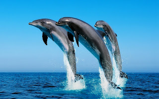 3 Dolphins Jumping Ocean HD Wallpaper