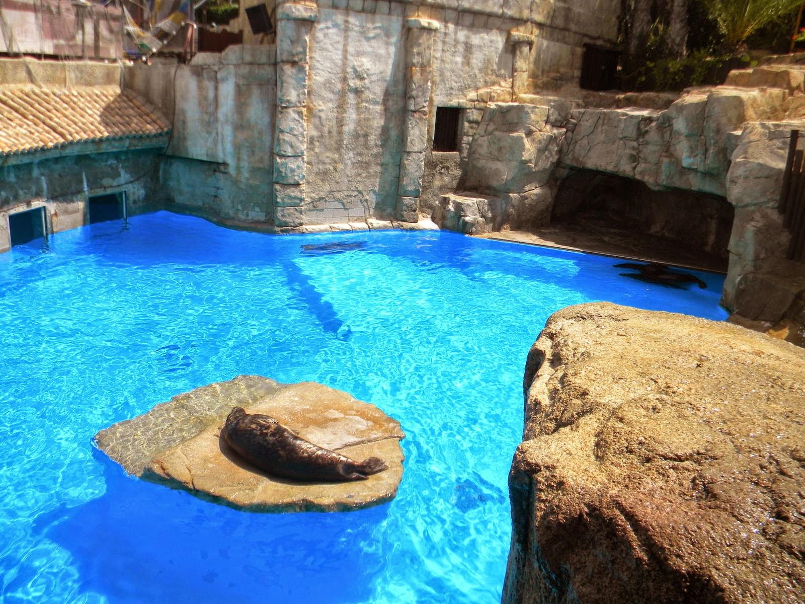 Trabajar en el zoo: Cuidados del león marino de california