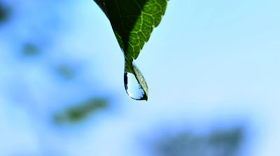 Man-made raindrop on leaf.