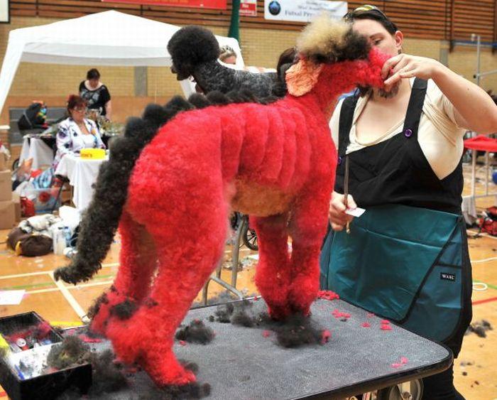 http://2.bp.blogspot.com/-FkJrg43Z5xs/TpuzNMQAmtI/AAAAAAAADs8/g_Oxcg6bqXg/s1600/Dog+Grooming.jpg
