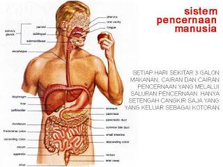 Jadwal Jam Kerja Organ Tubuh Manusia