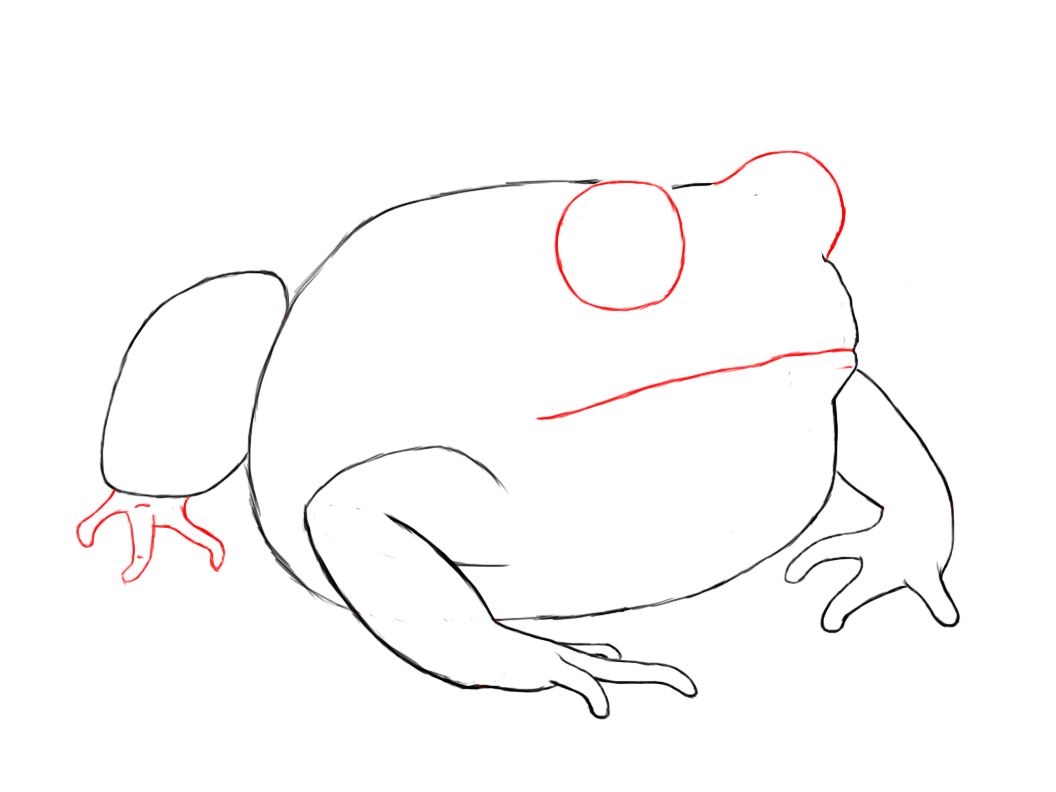 Image Gallery toad drawing