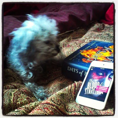 A tiny, fuzzy grey poodle--Murchie--laying next to both a hardcover UK edition of Days of Blood & Starlight and an iPod with the North American cover displayed on it. Murchie's face is blurred. The hardcover is dark blue with a gout of flame on it, while the iPod shows a pale person's face with the eyes outlined in a masklike red tracery. The books and the dog sit atop a rumpled red tapesty comforter.