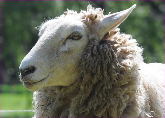 Marketiing online 3.0 son los mismos lobos con piel de oveja