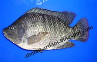 nama ilmiah ikan