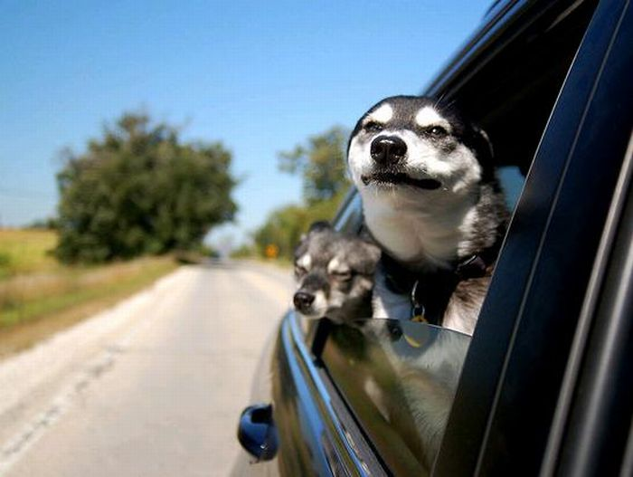Dog Seat For Car >> Funny Dog Faces at 50 MPH ~ Damn Cool Pictures