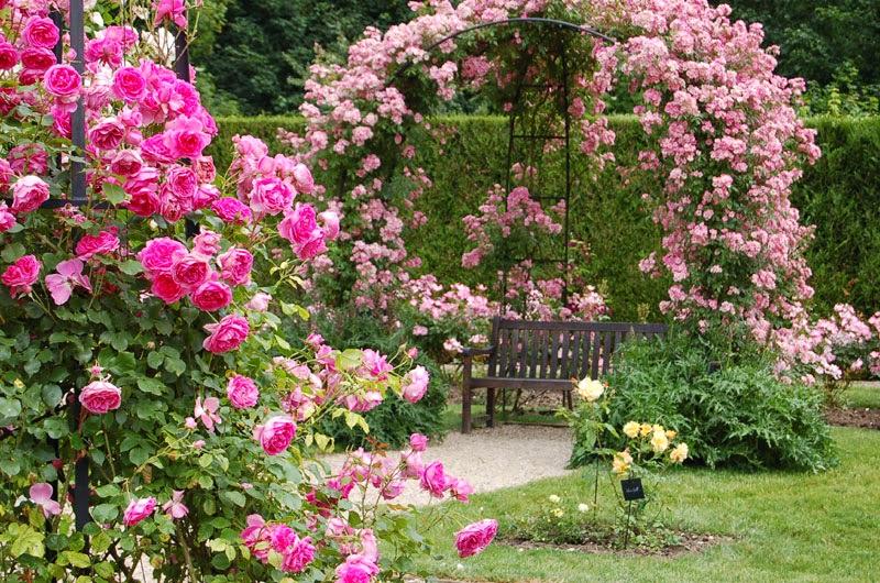 Breuillet Nature: Au jardin d\'ornement