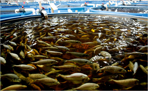 Food industry misconceptions carophyll because color matters for Farm raised fish