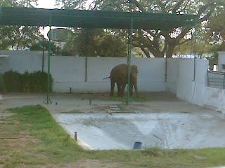 kankaria zoo elephant