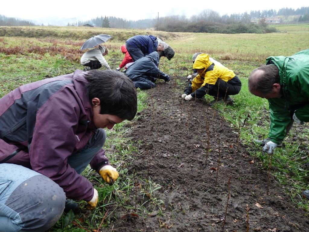 Fundaci n lurgaia fundazioa la importancia del origen de for Importancia economica ecologica y ambiental de los viveros forestales