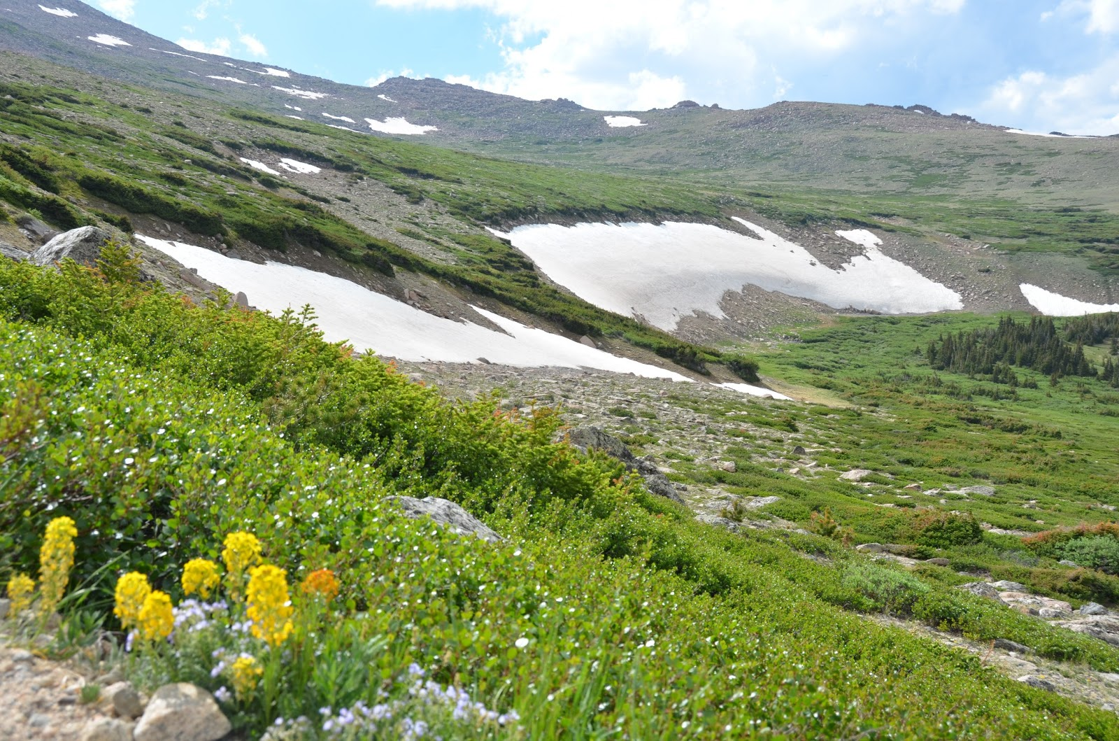 Flour Sack Mama Rocky Mountain Alpine Tundra Wildflowers