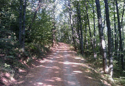 Bosque de la Honfria