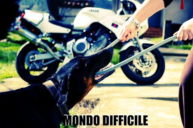 MONDO DIFFICILE