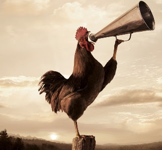 rooster crowing with horn