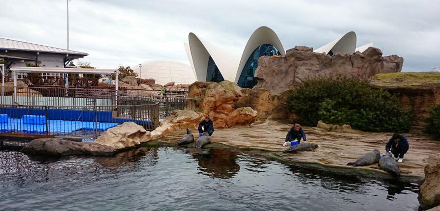 Oceanográfico de Valencia.