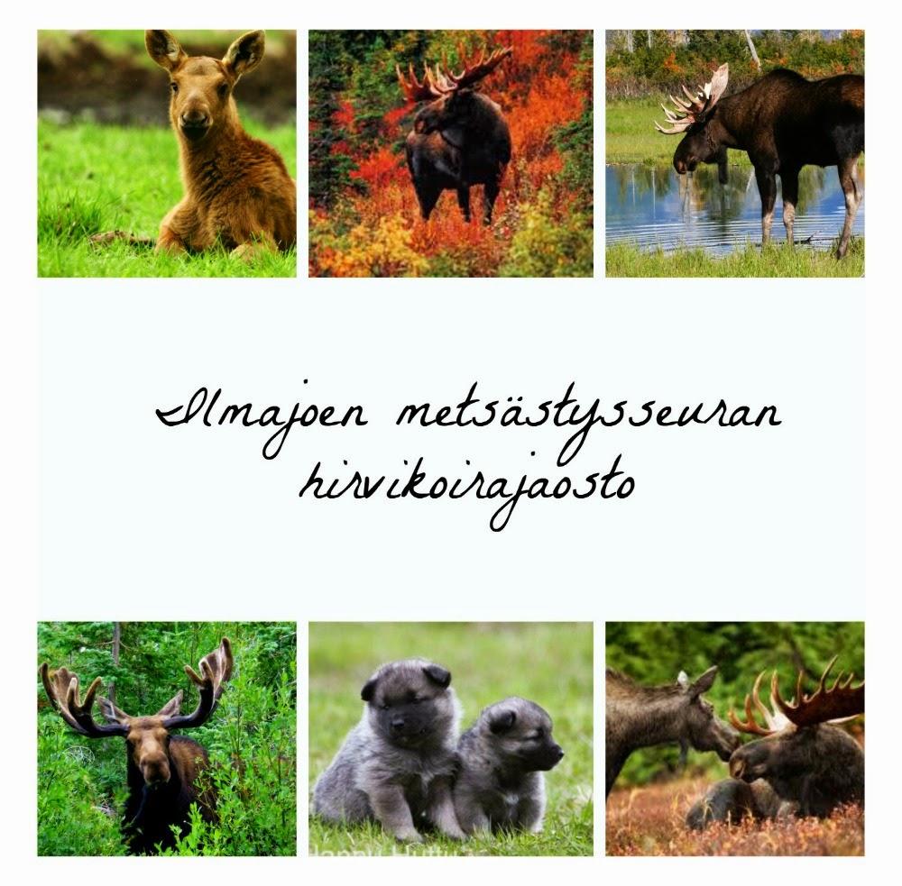 Ilmajoen metsästysseuran hirvikoirajaosto