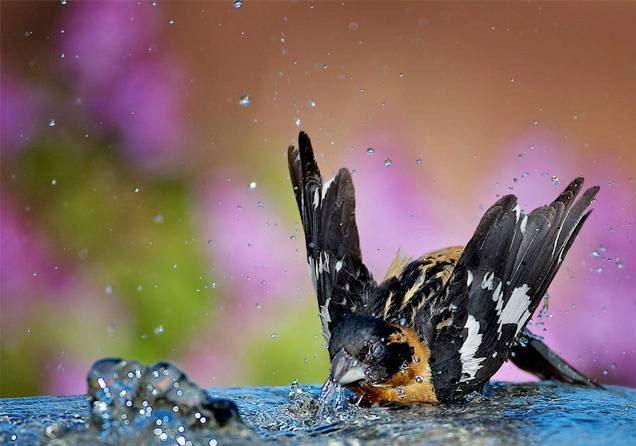 Beautiful Bird In Rainy Season Wallpaper For Desktop