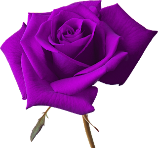 LA MUSICA DEL MUNDIAL Rosas+png+(4)