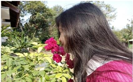 Bunga Mawar Yang Sangat Harum
