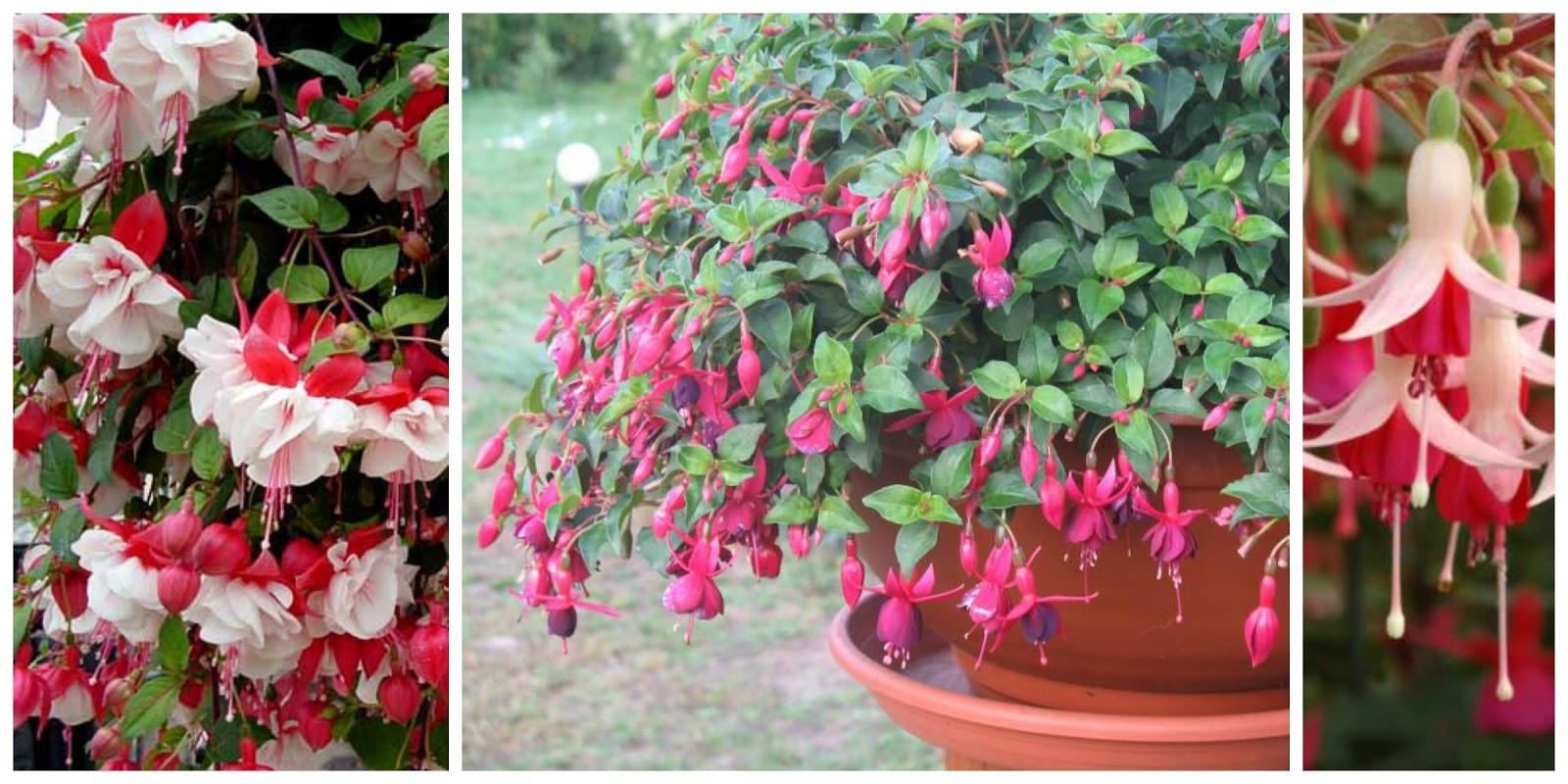 Jakie Kwiaty Posadzić W Maju By Kwitły Do Późnej Jesieni Czyli