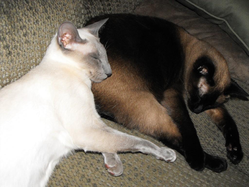 ways to memorialize a pet