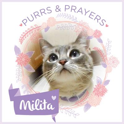PURRS FOR MILITA