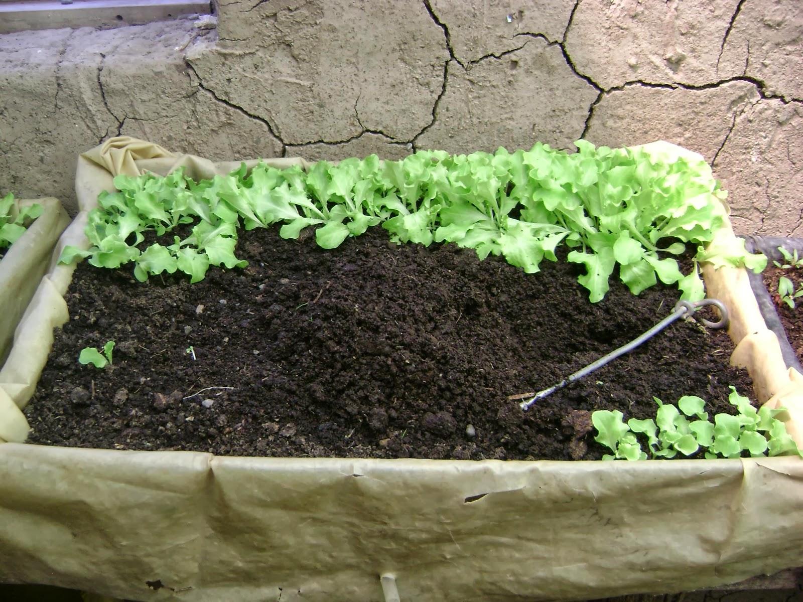 Agricultura urbana en el alto manual producci n de - Cuando plantar tomates ...
