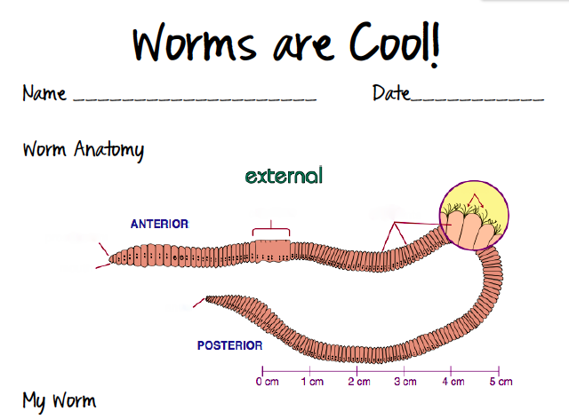 Anatomy of a worm diagram