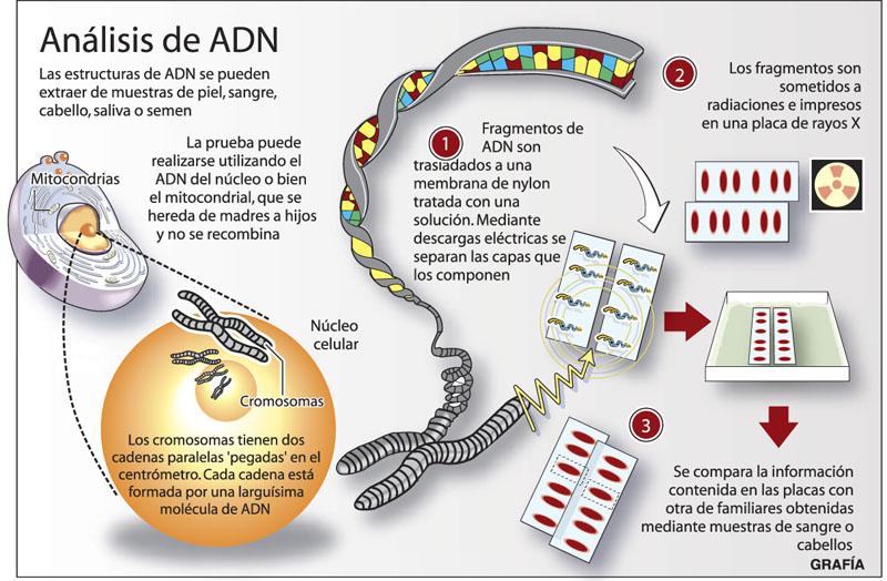 historia descubrimiento acido nucleico: