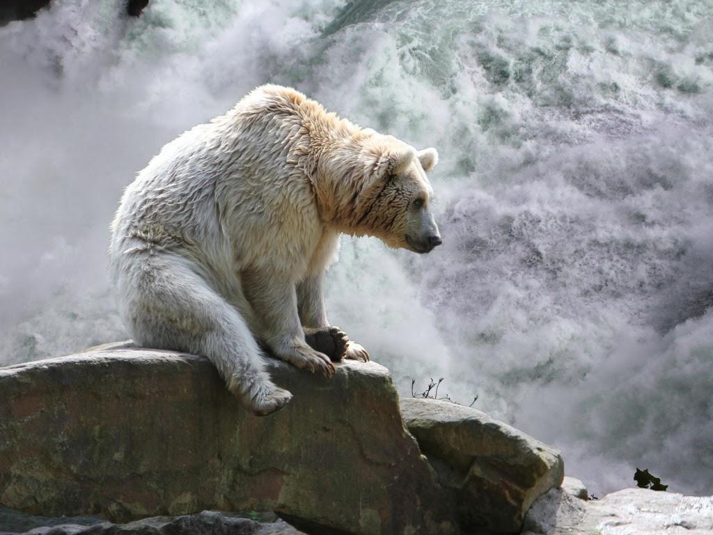"<img src=""http://4.bp.blogspot.com/-9r0yXBh9Ahc/UtuqGCvNORI/AAAAAAAAI-Y/pd-e3OzFdpc/s1600/angry-bear.jpeg"" alt=""bear at waterfall"" />"