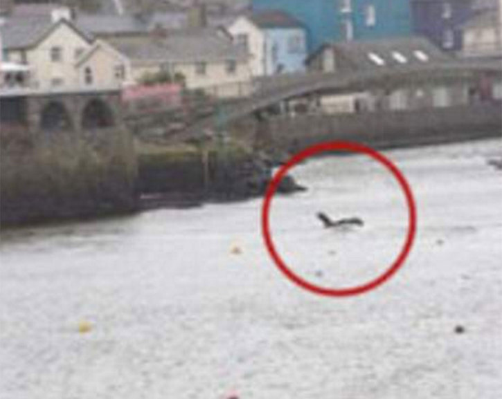 Bigfoot Evidence: Photo Of The Wales Cryptid The Barmouth ... Real Sightings Of Monsters