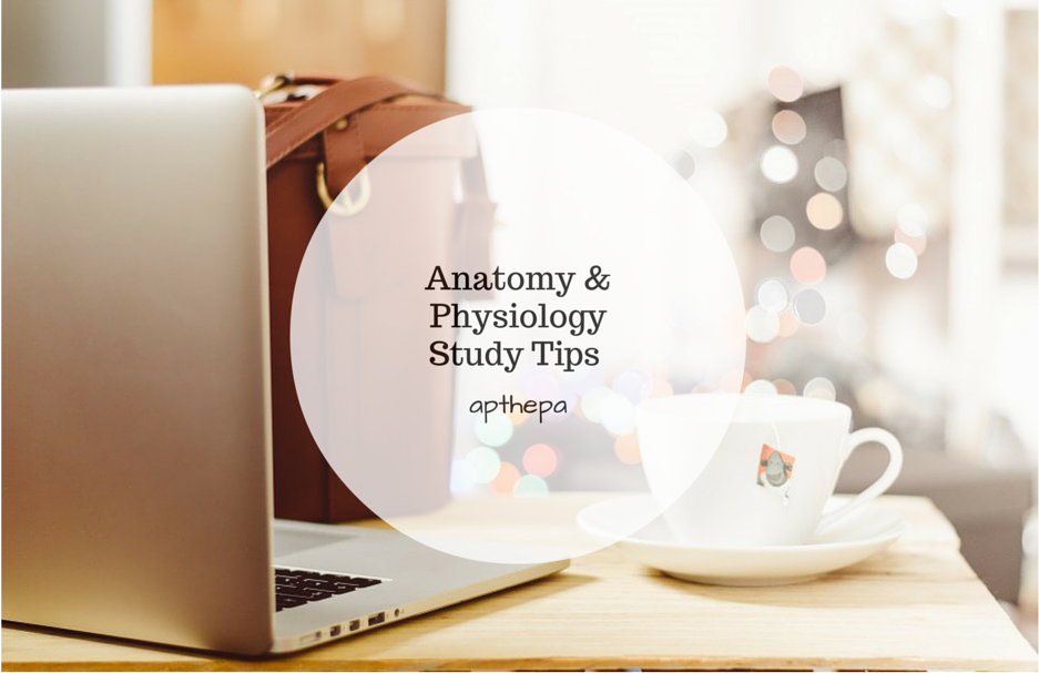 Study tips for anatomy