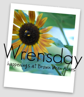 Wrensday:  happenings at Brown Wren Acres