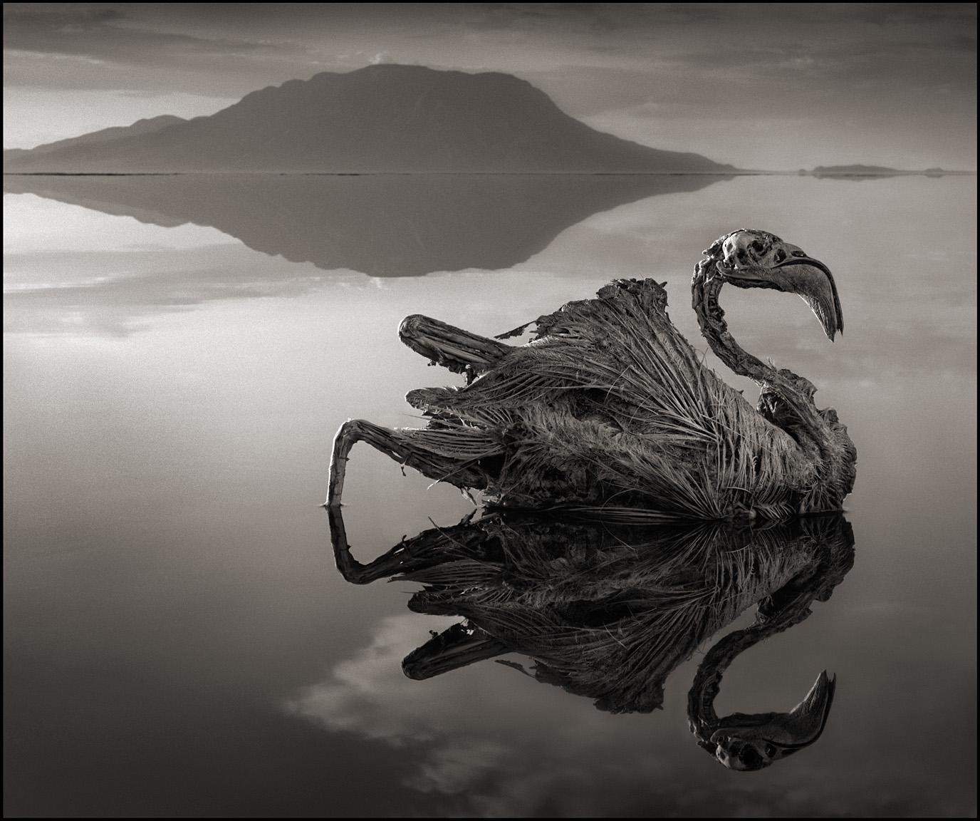 lake natron, lake tanzania, flamigo