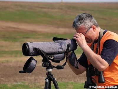bird watching fundata