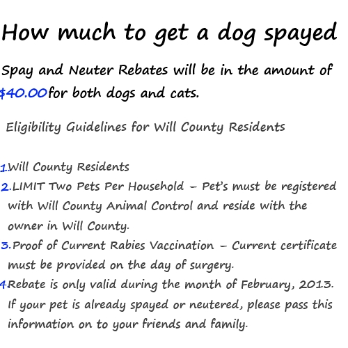 Can You Get A Dog Spayed If She Is Pregnant