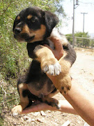 Cachorritos buscan hogar. Bellos cachorros a la espera de ser adoptados.