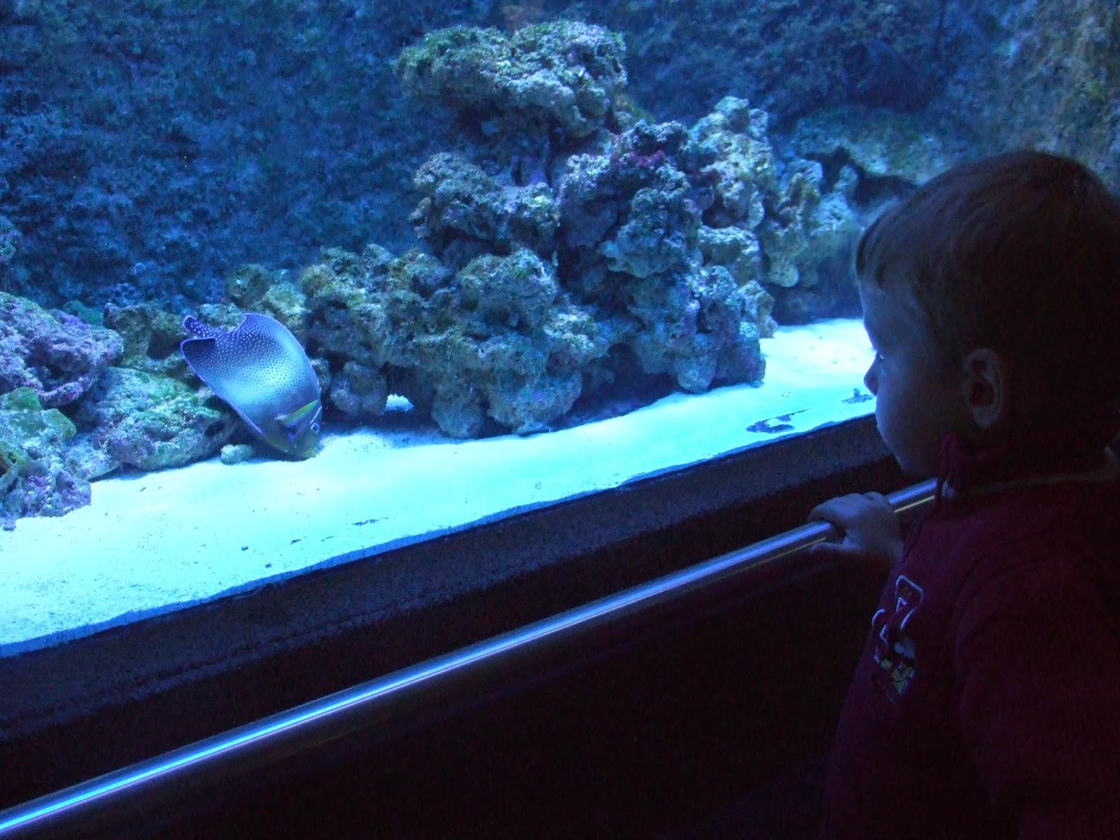 Akwarium Gdyńskie, czyli poznajemy morskie życie