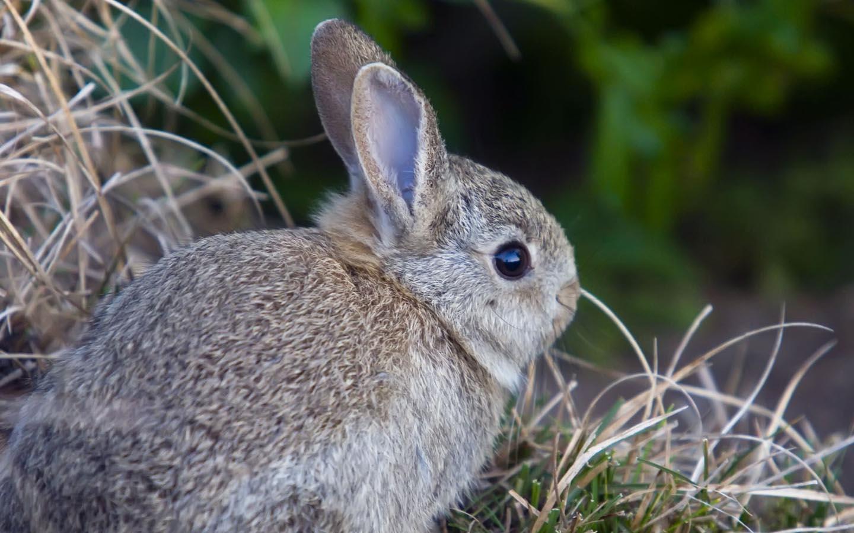 http://2.bp.blogspot.com/-Fp2h08EXEEA/UExBf4cMyfI/AAAAAAAAAXc/PdJplQ9vkEs/s1600/wild-rabbit-hd-images.jpg