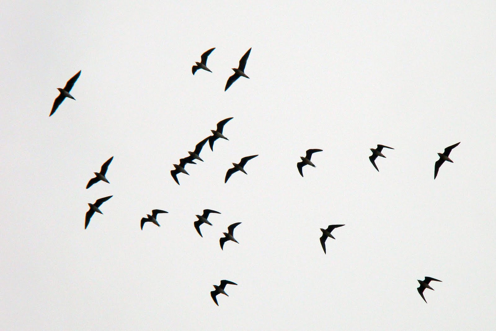 how to draw a flock of birds flying
