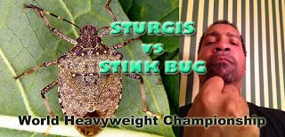 Daryl T Sturgis versus the Stink Bug