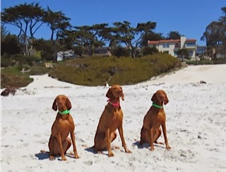 Lily's sister Zola and owner join us at the beach for a romp